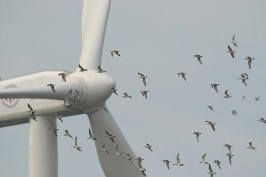 rüzgar santralleri ve kuşlar