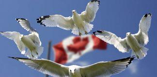 kanada-komur-santrallerini-kapatiyor, kanada-yenilenebilir-enerji, kanada-bayragi