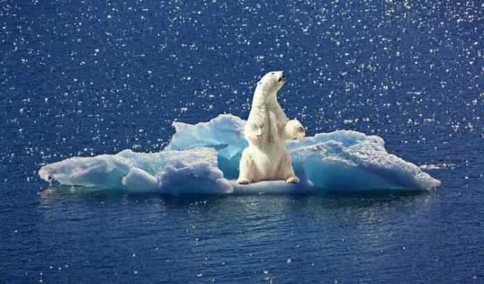 küresel ısınma, küresel ısınmanın nedenleri, küresel ısınmanın sonuçları, küresel ısınmanın etkileri, küresel ısınmaya karşı neler yapabiliriz, küresel ısınma ve türkiye